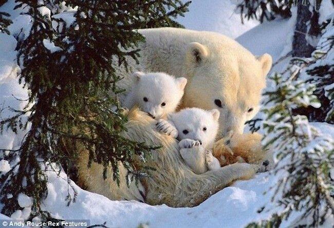 Шкура плюшевых медведей как одежда (4 фото)