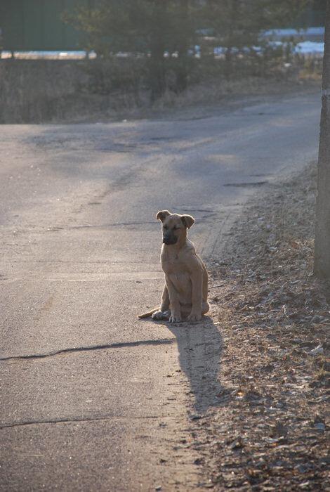 Очень одинокий щенок