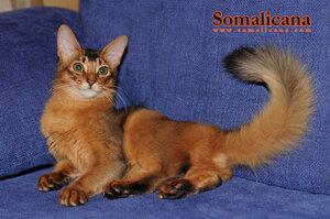Somalicana Botichelli 5 month