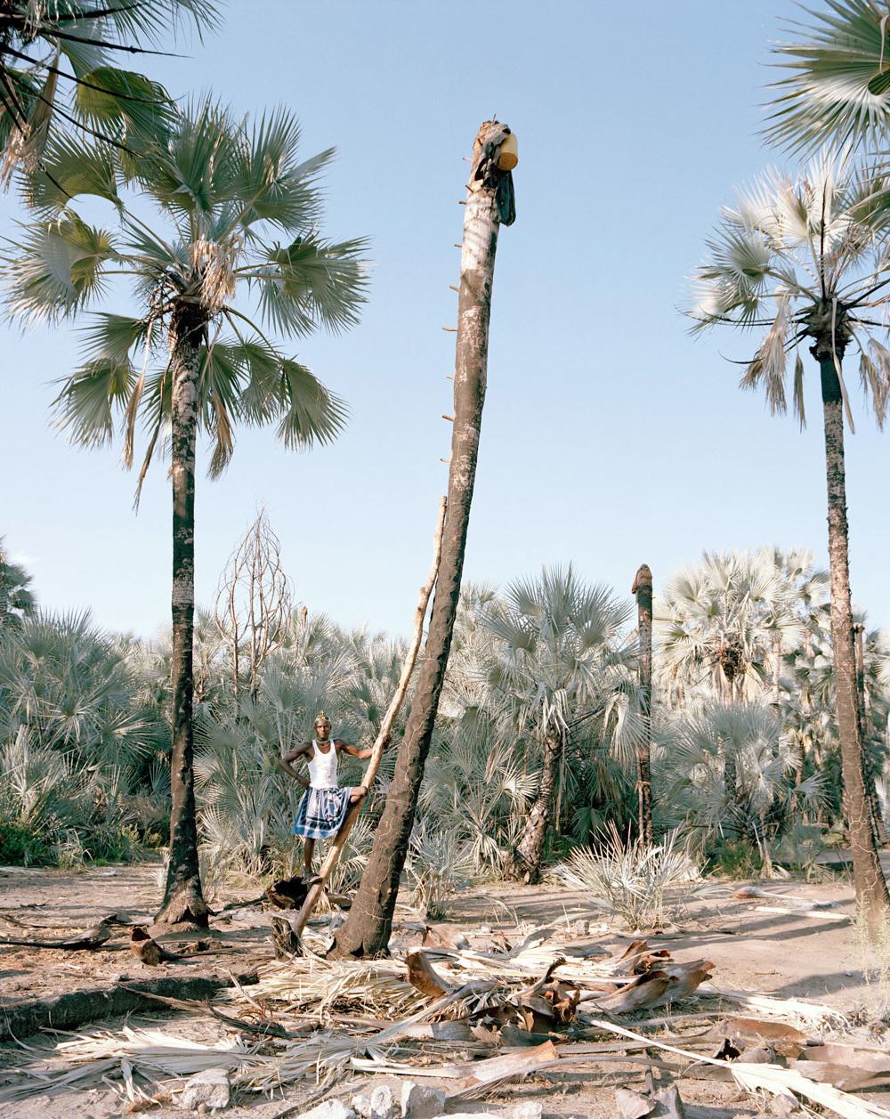 Добыча пальмового вина в Африке