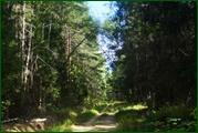http://img-fotki.yandex.ru/get/32234/15842935.381/0_ead0b_626f7095_orig.jpg
