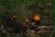http://img-fotki.yandex.ru/get/32234/15842935.385/0_eadf7_f0281b61_orig.jpg