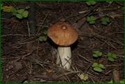 http://img-fotki.yandex.ru/get/32234/15842935.386/0_eae31_2eb0c745_orig.jpg