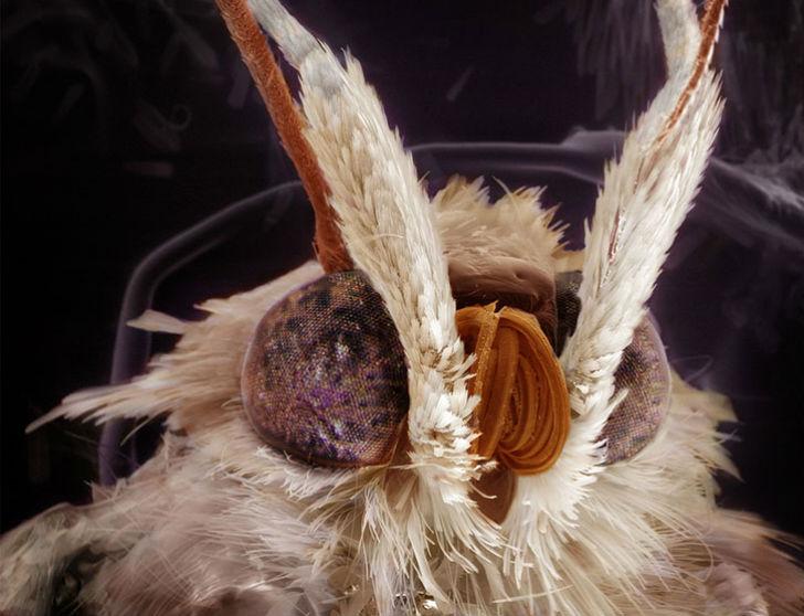 Удивительные портреты знакомых вам насекомых (9 фото)
