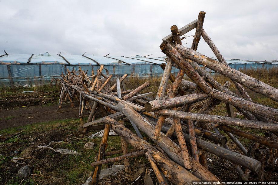 08. Старой пленкой закрыты дрова, которыми будут топить теплицы зимой.