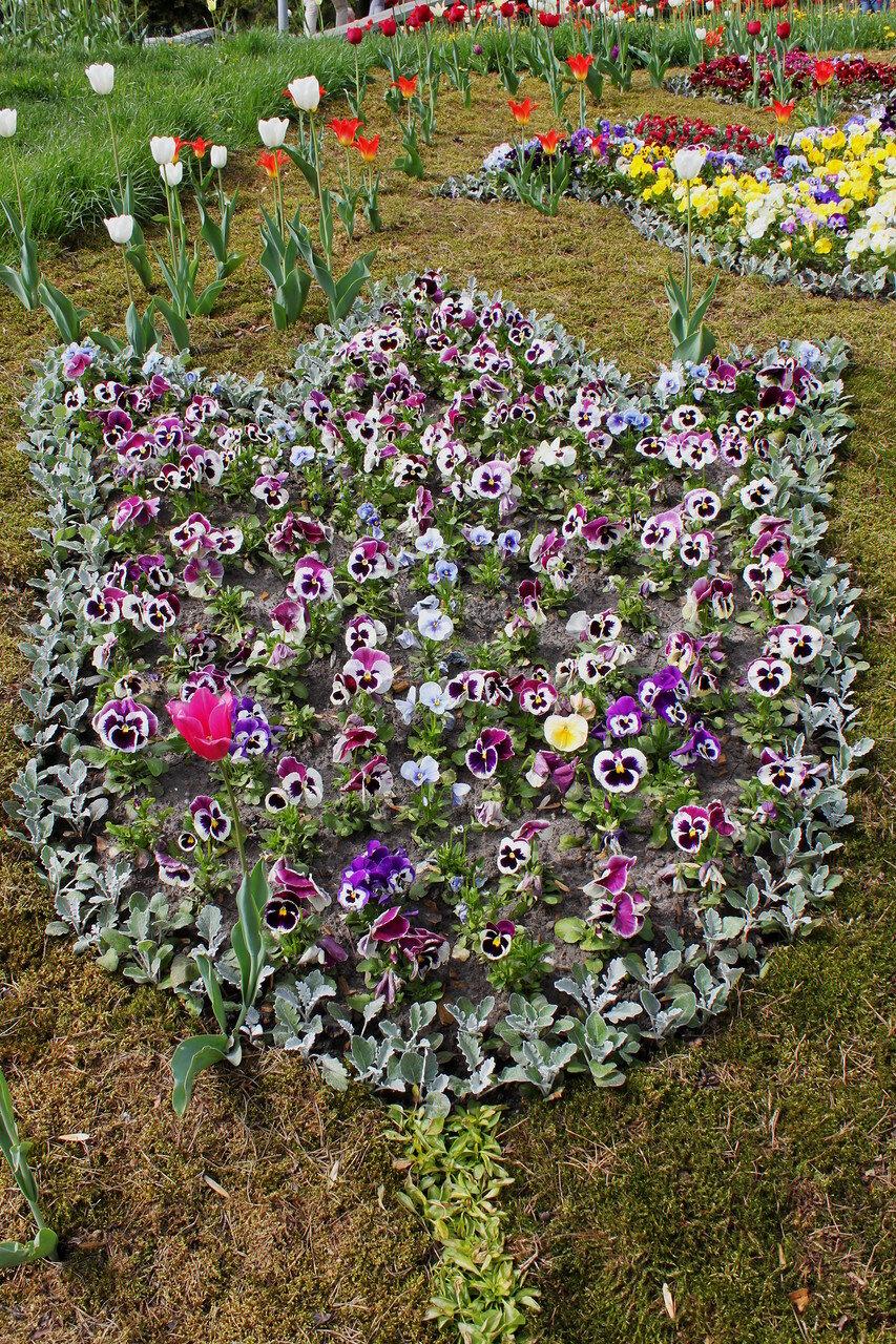 Изображение тюльпана из цветов