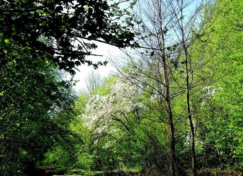 Апрель, в походе, путь к водопадам, окрестности Горячего Ключа (17).JPG