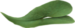 ial_ao_sng_leaf2.png