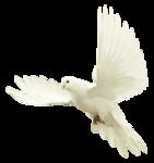 EenasCreation_Symphony_of_Angel_el6.png