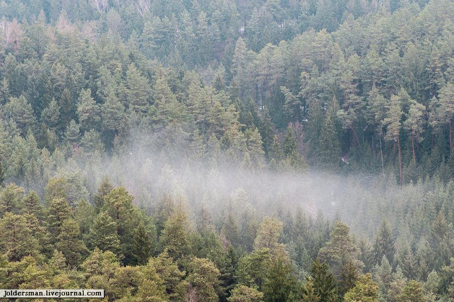 вид на лес с вершины