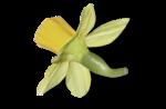 natali_design_easter_flower12-sh1.png