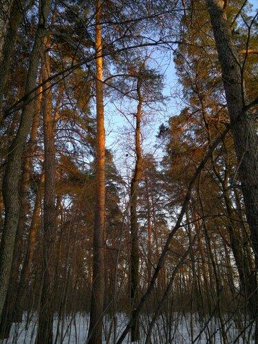 6. Смешанный лес