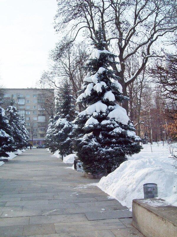 Боковая аллея парка Славы зимой