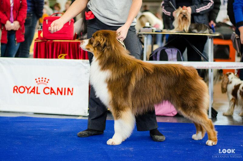 Выставочные успехи наших собак - 5 - Страница 30 0_afa74_188d1f62_XL