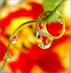 тюльпановые страсти... по весне