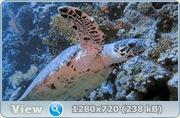 Коралловый риф 3D / Faszination Korallenriff 3D (2011/Blu-ray/BDRip/720p/HDRip)