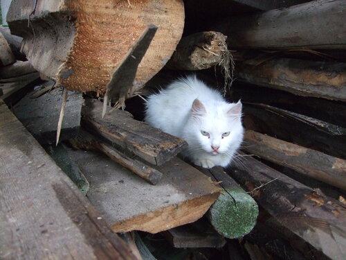 Кошка на бревнах
