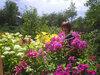 Лето в саду
