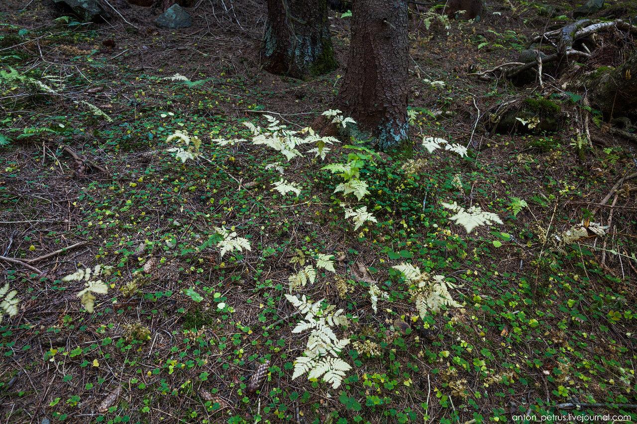 Карпаты. Сказочный лес