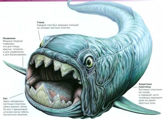14. Terataspis grandis Terataspis Grandis может быть переведен как «великий монстрообразный щ