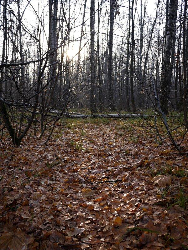 опала листва