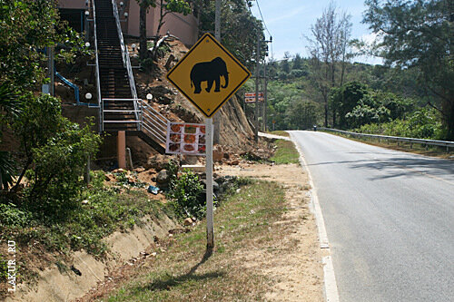 слон таиланд дорога
