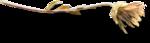 ldavi-fallingleavesautumntea-driedflower22.png