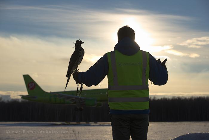 Птицы особого назначения