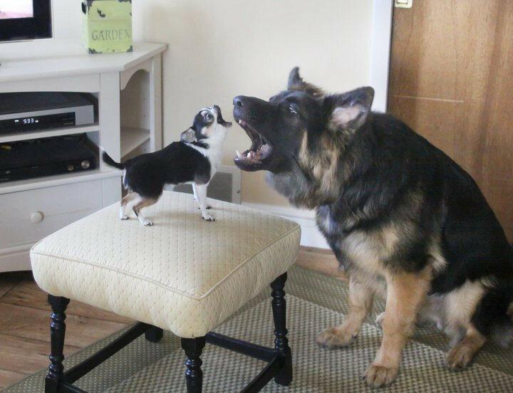 собакены-живность-2855573.jpeg