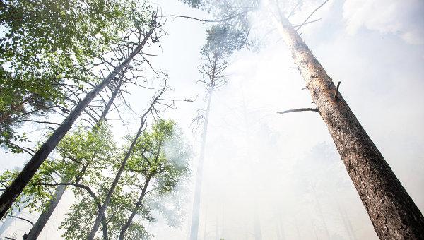 Медведев раскритиковал Пучкова занеэффективную работу МЧС напожарах вСибири
