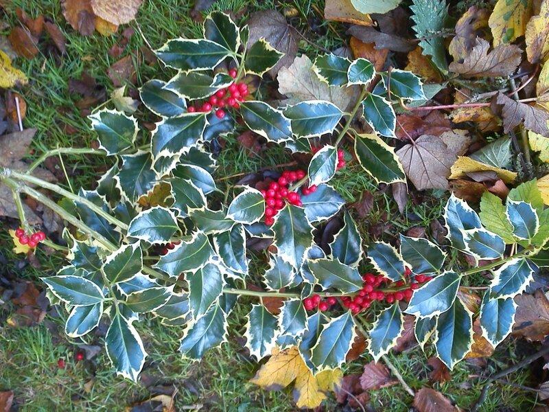 Lonon winter colors