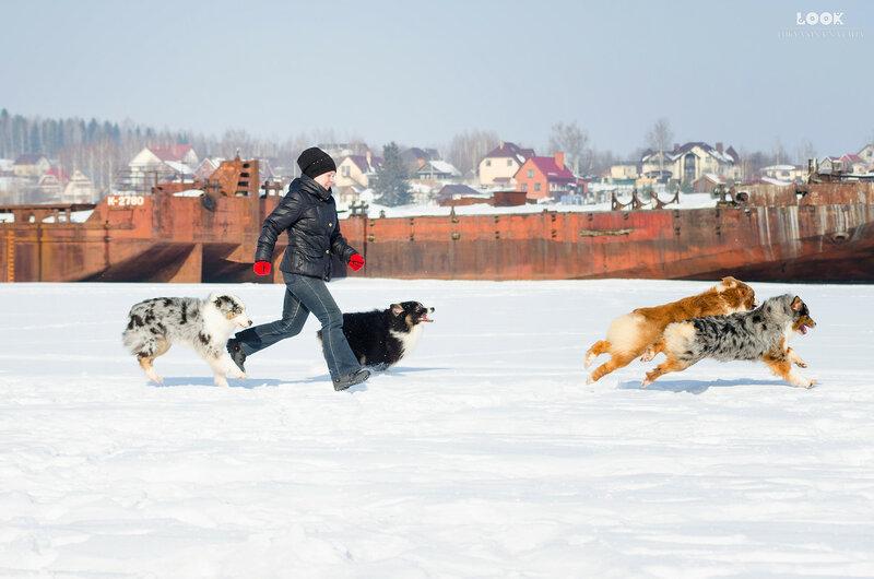 Мои собаки: Зена и Шива и их друзья весты - Страница 8 0_a839f_cdf2292a_XL