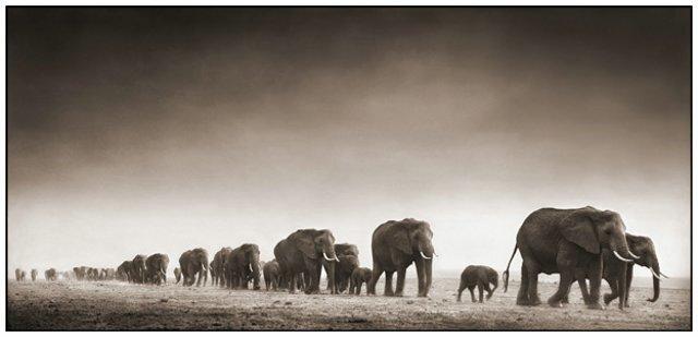 Природа. Фотограф Ник Брандт
