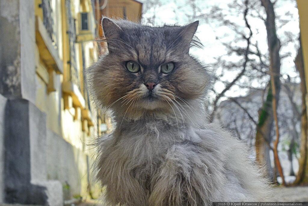 для кошки в севастополе картинки центры
