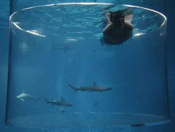 Ник Вуйичич поплавал в воде со смертельными акулами 0 12da92 d8a6e0d2 orig