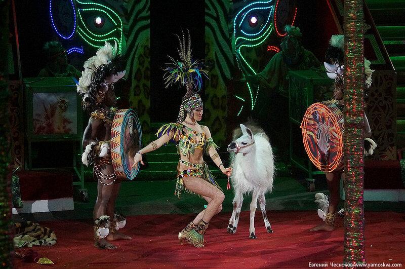 Зима. Королевский цирк. 20.02.15.30.Африка..jpg