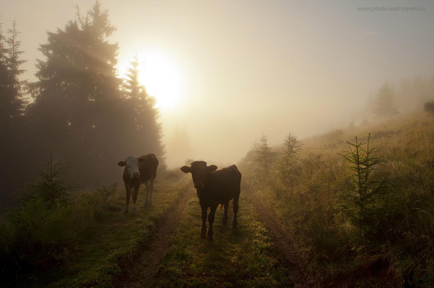 25. Встреча в тумане (1/320, -0.67, f/10, 18 mm, 200)
