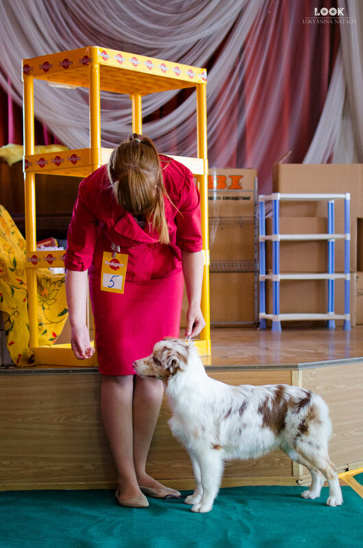 Выставочные успехи наших собак - 5 - Страница 27 0_a880a_5546bdf0_XL