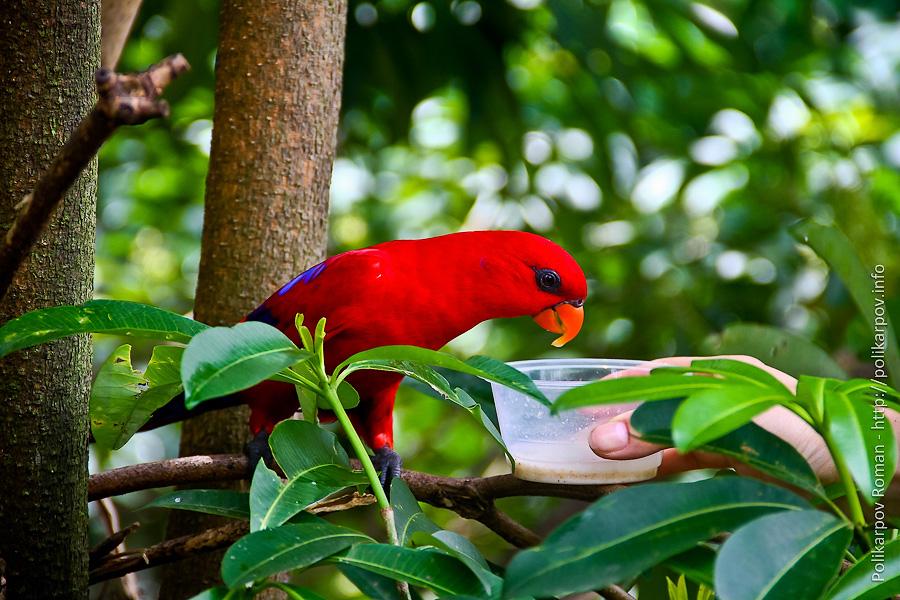 0 c4fd3 73ed835 orig Парк птиц Jurong в Сингапуре