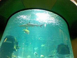 Акула в аквариуме Mega в Каунасе