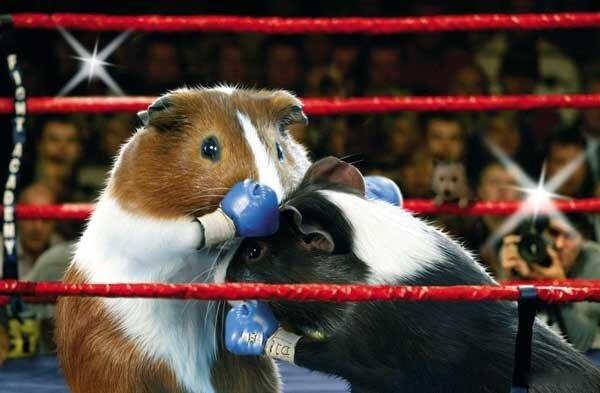 [Animal Olympics 01.jpg]