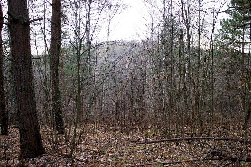 Псковская область, ноябрь, холмы, лес