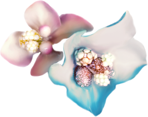 NLD Flowers.png