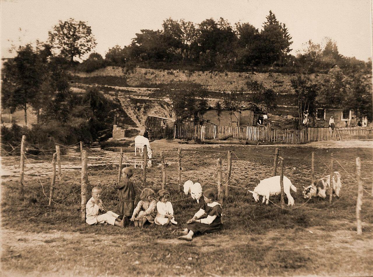 24. Дети пасут коз в проволочных заграждениях