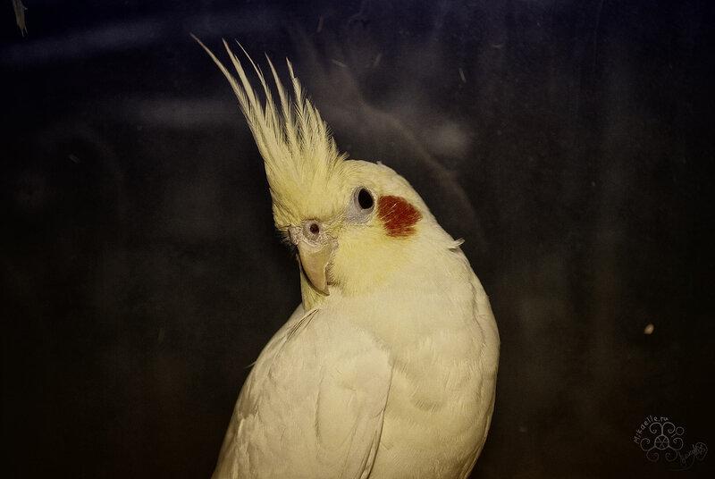 Гламурный ретро-попугай)