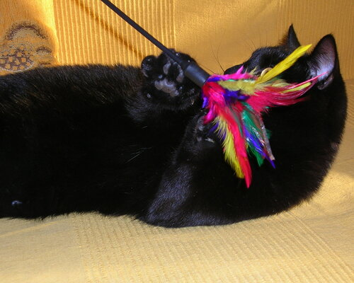 lapitzkaya — «Котя в профиль» на Яндекс.Фотках