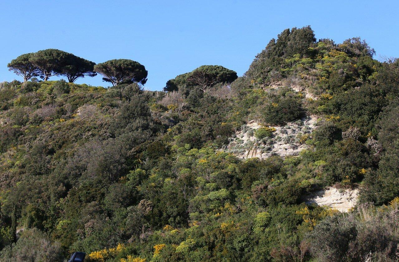 Ischia, Lacco Ameno. Monte Vico.