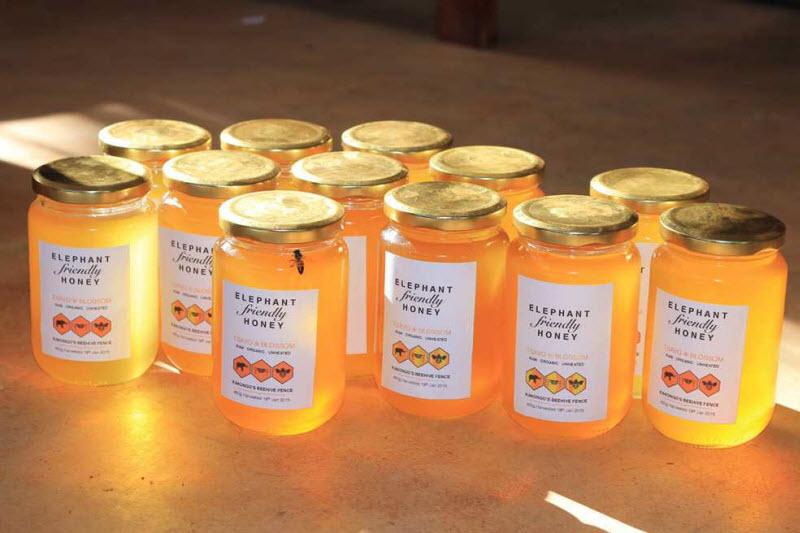 Защита пчелами от слонов