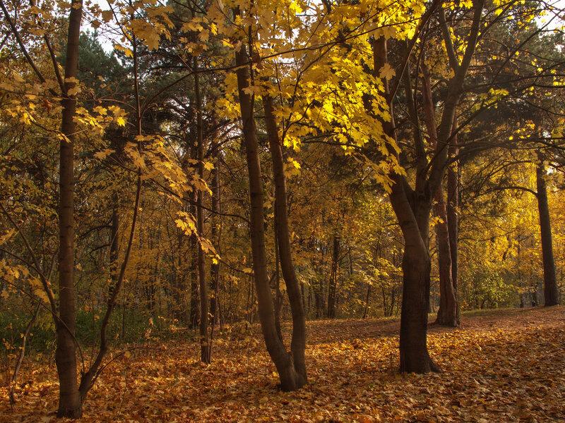 """""""Осень - сказочный чертог..."""""""