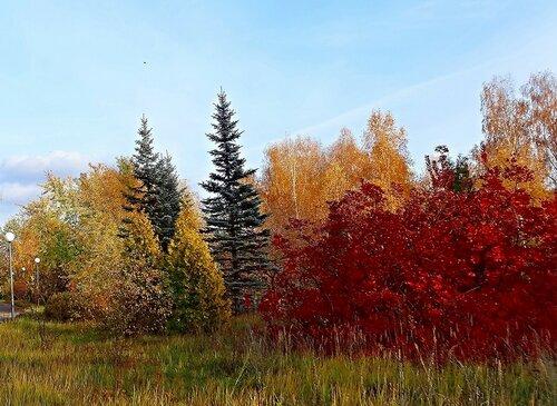 Как красиво осень раскрасила..